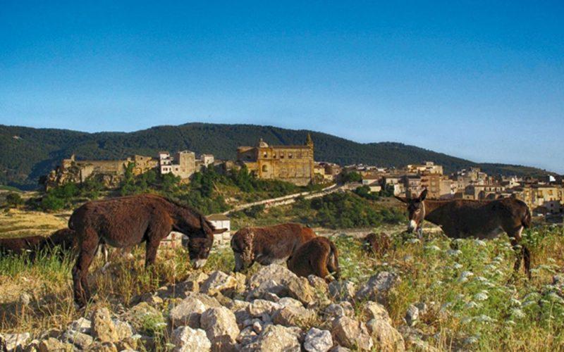 Самбука ди Сицилия