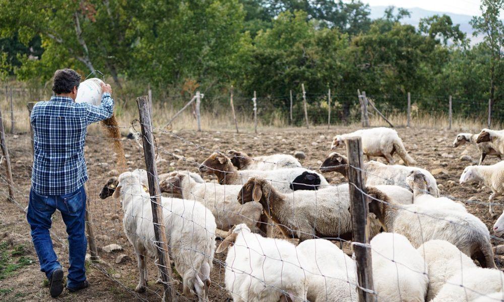 Сицилийский фермер Сальваторе
